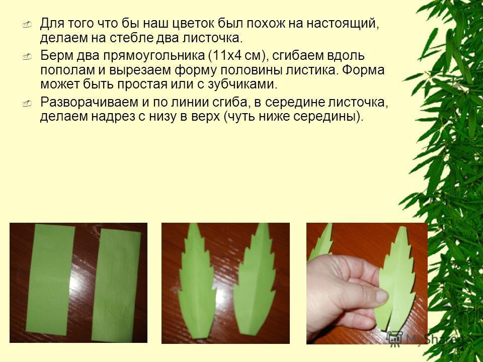 Для того что бы наш цветок был похож на настоящий, делаем на стебле два листочка. Берм два прямоугольника (11x4 см), сгибаем вдоль пополам и вырезаем форму половины листика. Форма может быть простая или с зубчиками. Разворачиваем и по линии сгиба, в