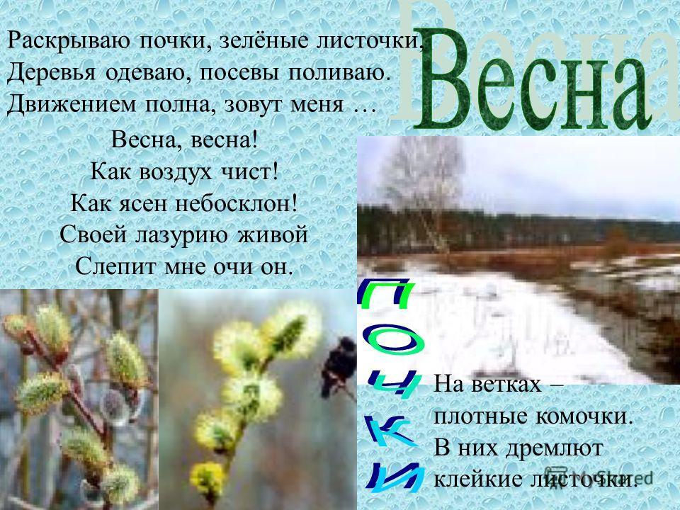 Весна, весна! Как воздух чист! Как ясен небосклон! Своей лазурию живой Слепит мне очи он. Раскрываю почки, зелёные листочки, Деревья одеваю, посевы поливаю. Движением полна, зовут меня … На ветках – плотные комочки. В них дремлют клейкие листочки.