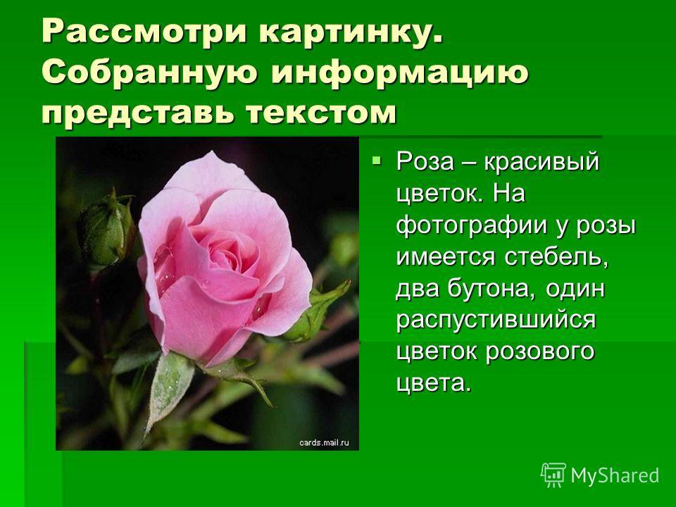 Рассмотри картинку. Собранную информацию представь текстом Роза – красивый цветок. На фотографии у розы имеется стебель, два бутона, один распустившийся цветок розового цвета. Роза – красивый цветок. На фотографии у розы имеется стебель, два бутона,
