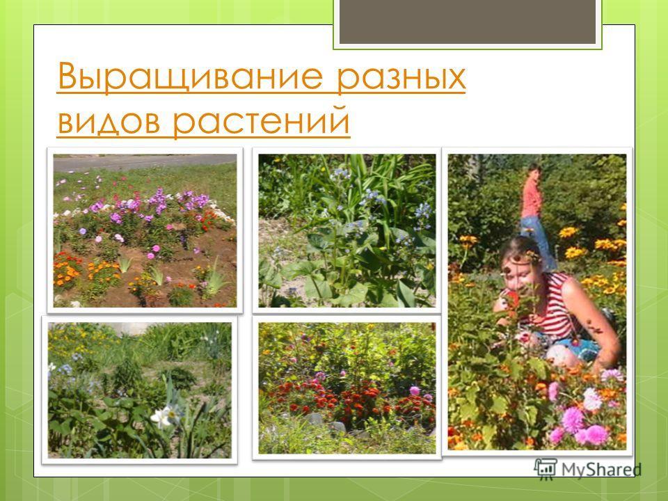 Выращивание разных видов растений