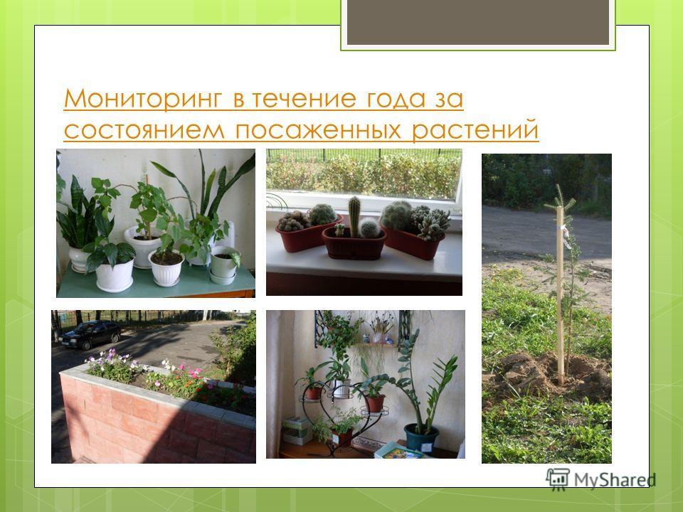 Мониторинг в течение года за состоянием посаженных растений