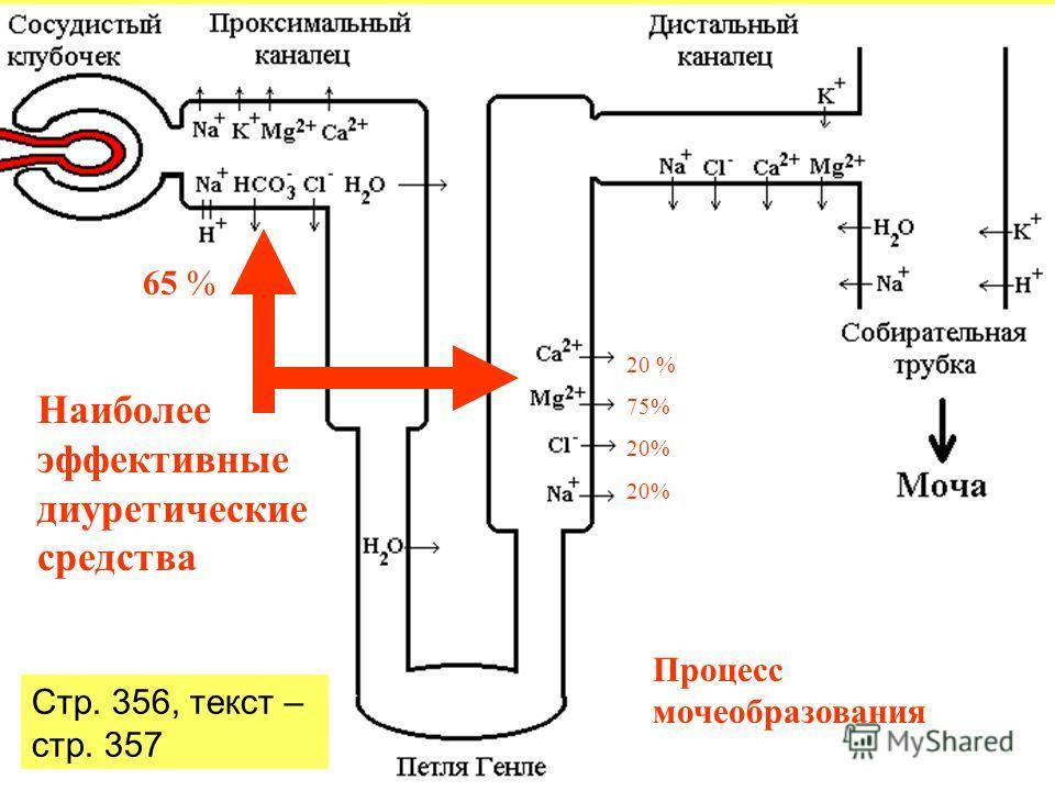 Процесс мочеобразования Наиболее эффективные диуретические средства 20 % 75% 20% 65 % Стр. 356, текст – стр. 357