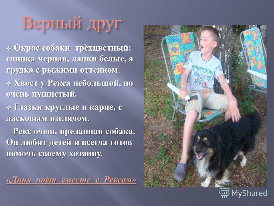 Верный друг Окрас собаки трёхцветный : спинка черная, лапки белые, а грудка с рыжими оттенком Окрас собаки трёхцветный : спинка черная, лапки белые, а грудка с рыжими оттенком. Хвост у Рекса небольшой, но очень пушистый. Хвост у Рекса небольшой, но о