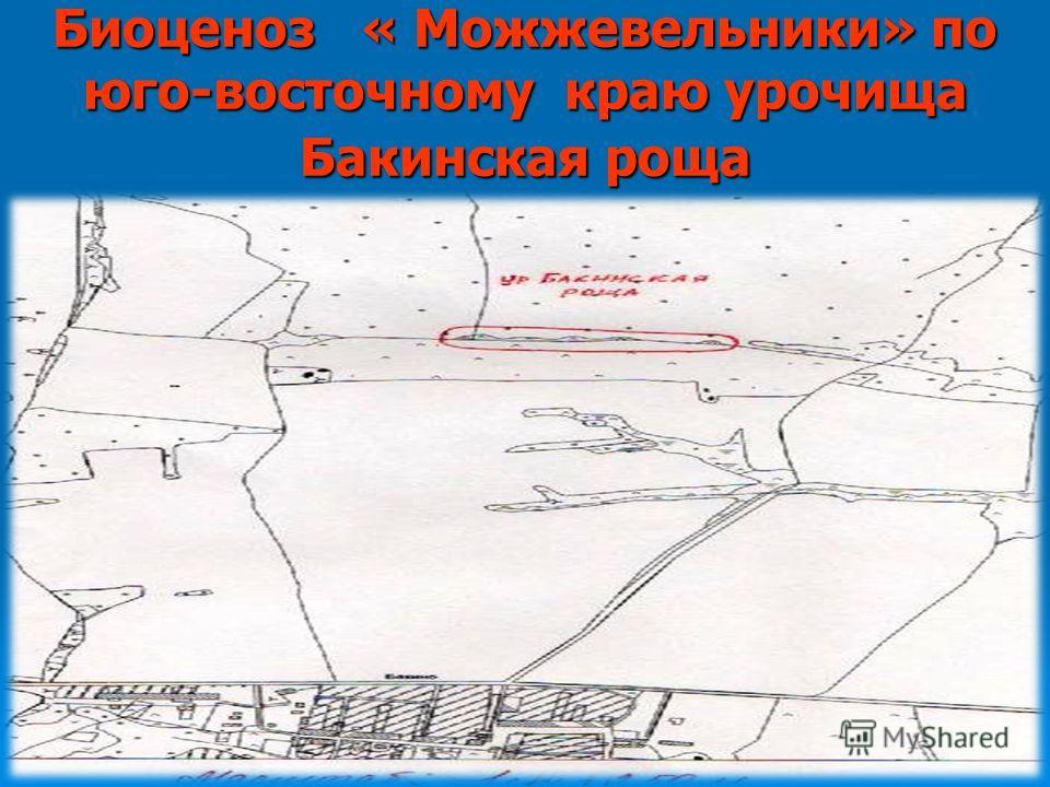 Биоценоз « Можжевельники» по юго-восточному краю урочища Бакинская роща