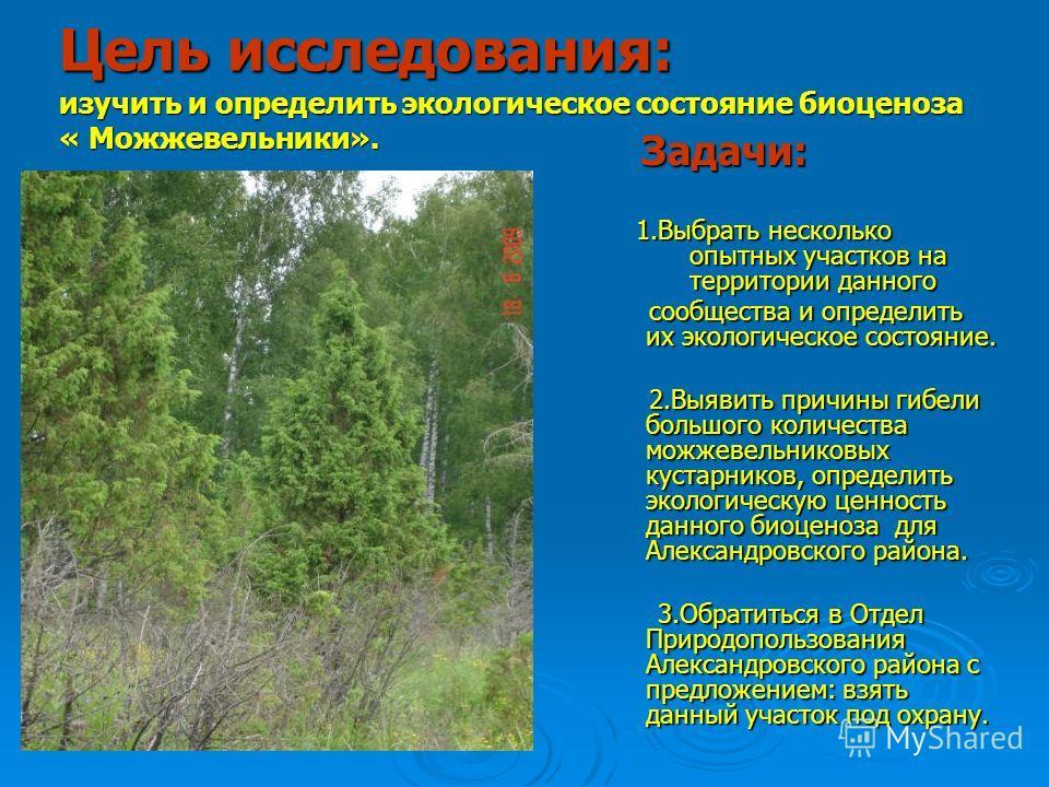 Цель исследования: изучить и определить экологическое состояние биоценоза « Можжевельники». Задачи: Задачи: 1.Выбрать несколько опытных участков на территории данного 1.Выбрать несколько опытных участков на территории данного сообщества и определить