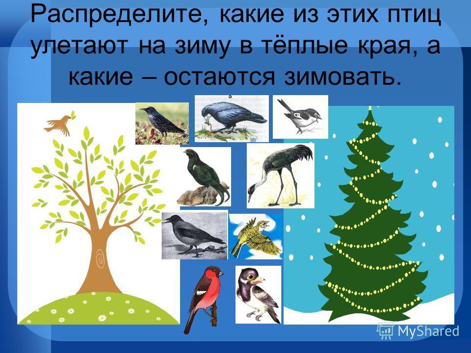 Распределите, какие из этих птиц улетают на зиму в тёплые края, а какие – остаются зимовать.