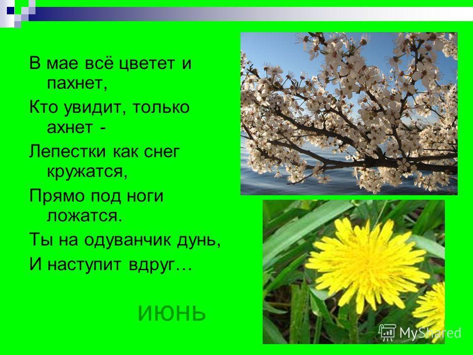 июнь В мае всё цветет и пахнет, Кто увидит, только ахнет - Лепестки как снег кружатся, Прямо под ноги ложатся. Ты на одуванчик дунь, И наступит вдруг…