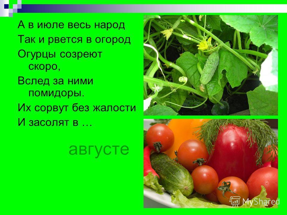 августе А в июле весь народ Так и рвется в огород Огурцы созреют скоро, Вслед за ними помидоры. Их сорвут без жалости И засолят в …