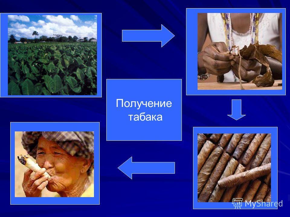 Получение табака