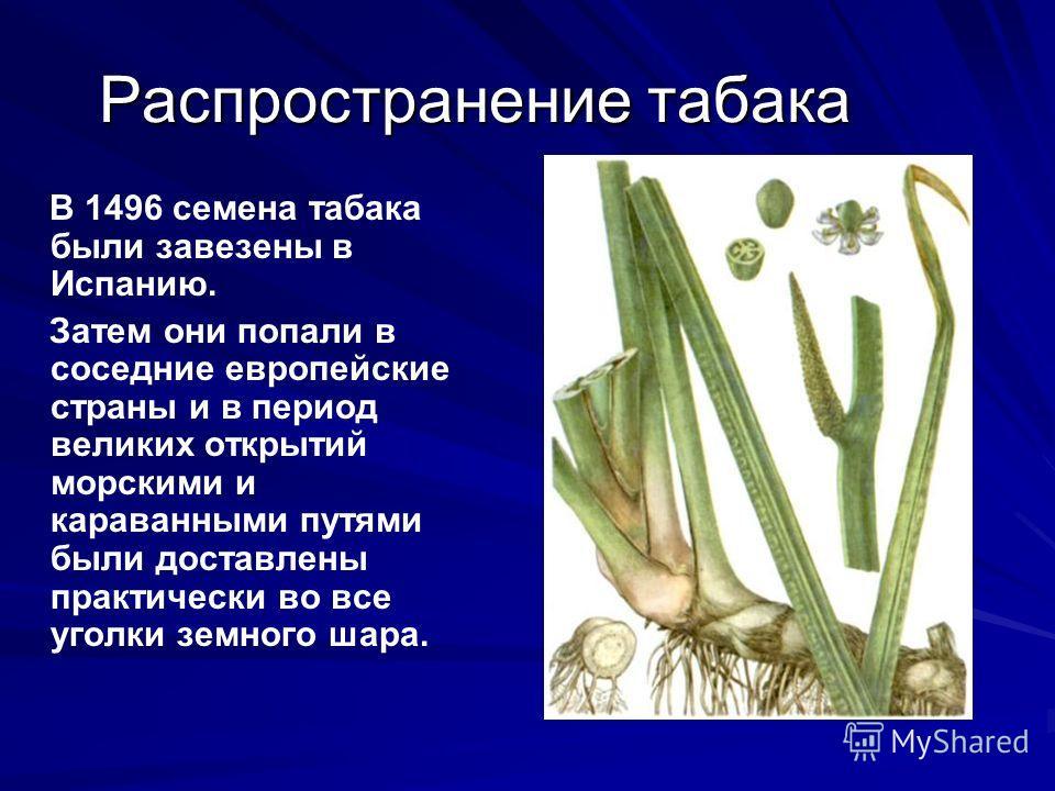 Распространение табака В 1496 семена табака были завезены в Испанию. Затем они попали в соседние европейские страны и в период великих открытий морскими и караванными путями были доставлены практически во все уголки земного шара.