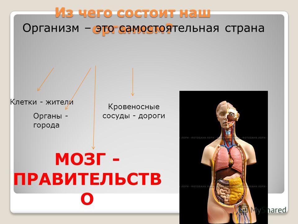 Из чего состоит наш организм? Организм – это самостоятельная страна Клетки - жители Органы - города Кровеносные сосуды - дороги МОЗГ - ПРАВИТЕЛЬСТВ О