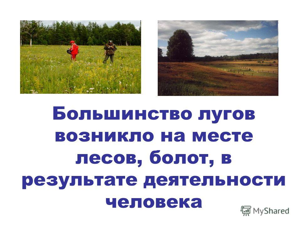 Большинство лугов возникло на месте лесов, болот, в результате деятельности человека