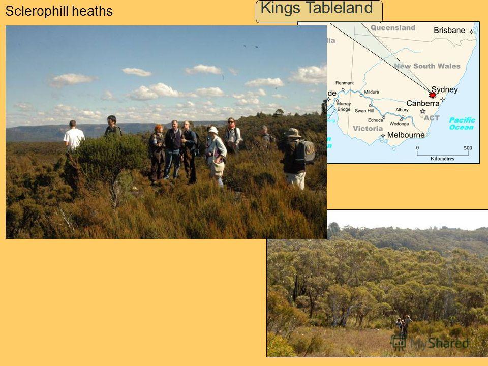Sclerophill heaths Kings Tableland