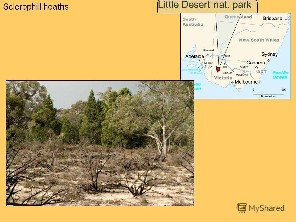 Sclerophill heaths Little Desert nat. park
