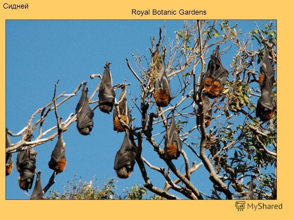 Сидней Royal Botanic Gardens