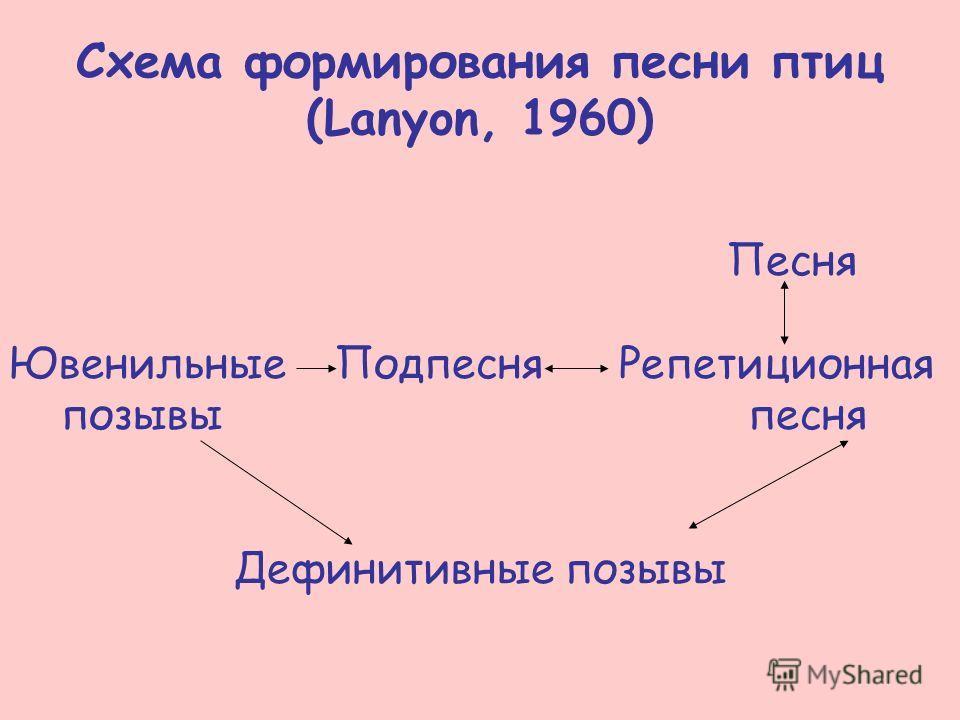Схема формирования песни птиц (Lanyon, 1960) Песня Ювенильные Подпесня Репетиционная позывы песня Дефинитивные позывы