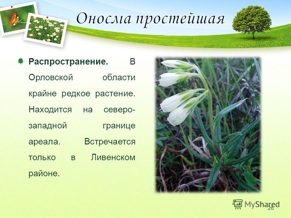 Распространение. В Орловской области крайне редкое растение. Находится на северо- западной границе ареала. Встречается только в Ливенском районе. 26