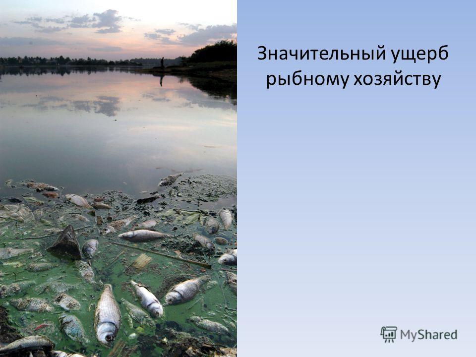 Значительный ущерб рыбному хозяйству