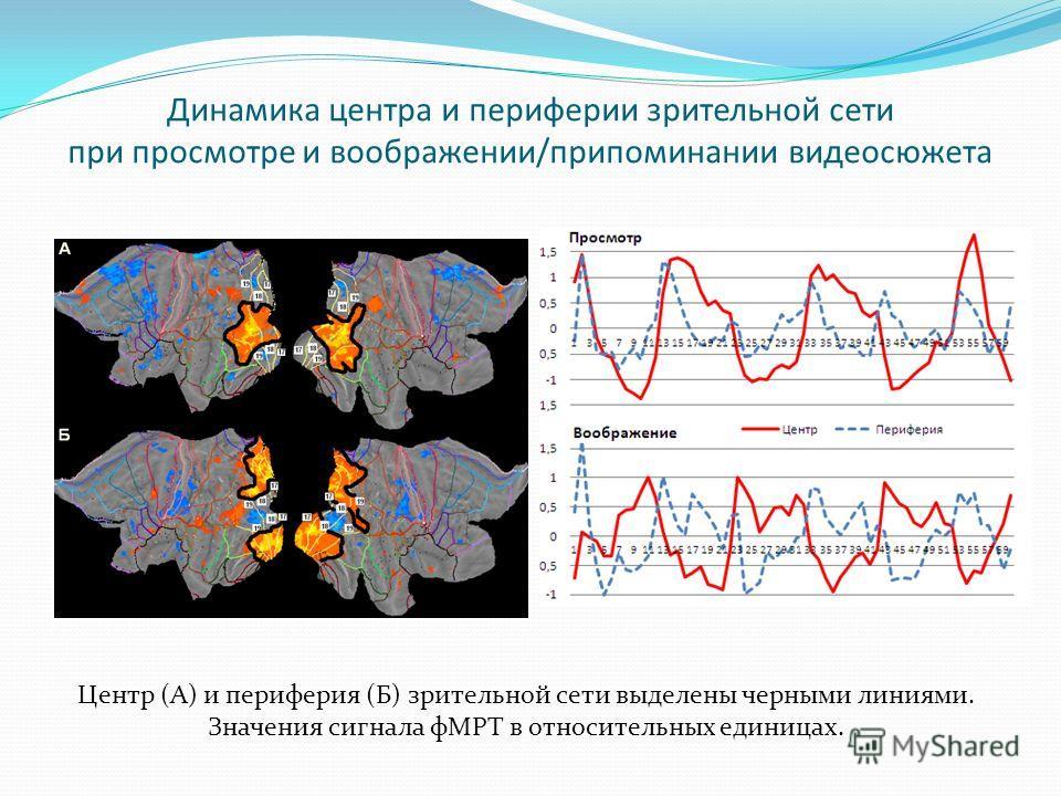 Динамика центра и периферии зрительной сети при просмотре и воображении/припоминании видеосюжета Центр (А) и периферия (Б) зрительной сети выделены черными линиями. Значения сигнала фМРТ в относительных единицах.