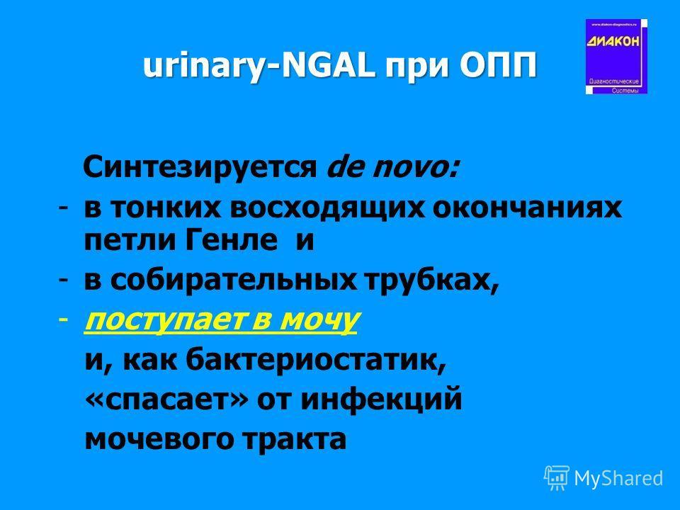 urinary-NGAL при ОПП Cинтезируется de novo: -в тонких восходящих окончаниях петли Генле и -в собирательных трубках, -поступает в мочу и, как бактериостатик, «спасает» от инфекций мочевого тракта