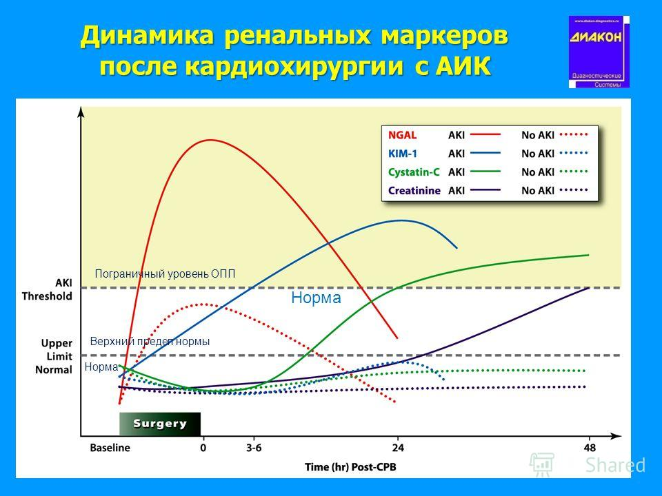 Динамика ренальных маркеров после кардиохирургии с АИК Пограничный уровень ОПП Верхний предел нормы Норма