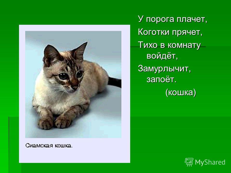 У порога плачет, Коготки прячет, Тихо в комнату войдёт, Замурлычит, запоёт. (кошка) (кошка)