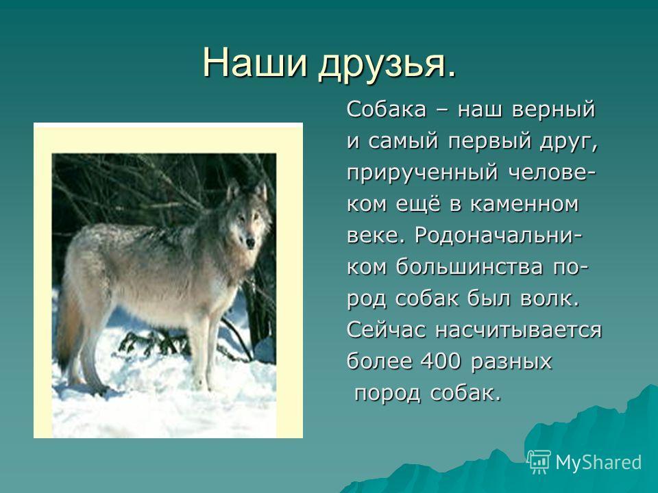 Наши друзья. Собака – наш верный и самый первый друг, прирученный челове- ком ещё в каменном веке. Родоначальни- ком большинства по- род собак был волк. Сейчас насчитывается более 400 разных пород собак. пород собак.
