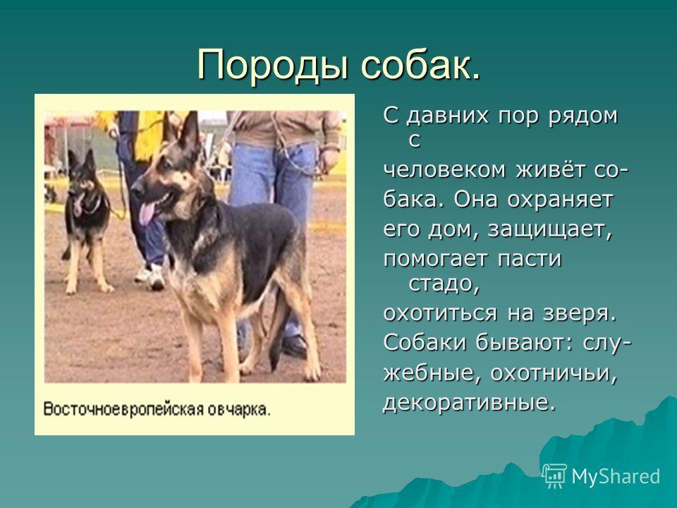 animal observation short stories