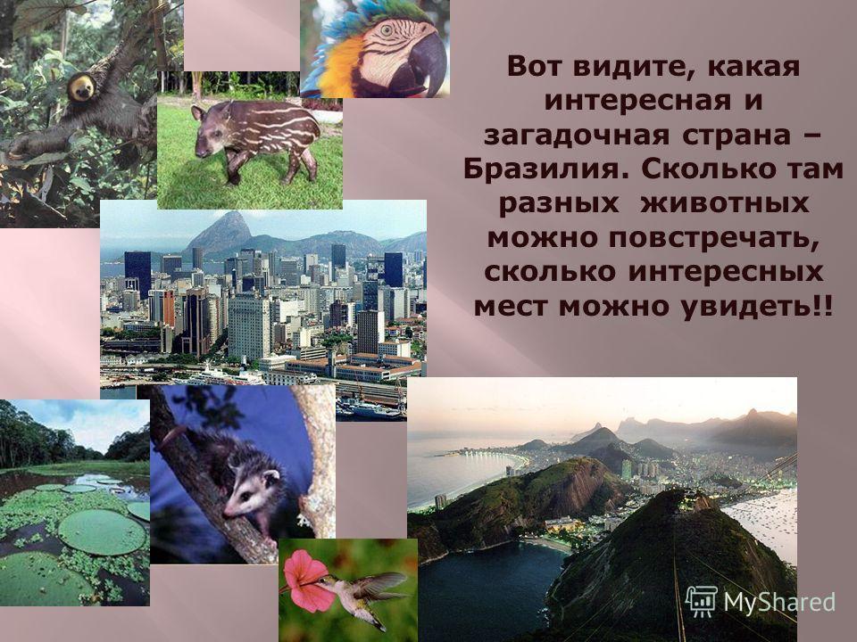 Вот видите, какая интересная и загадочная страна – Бразилия. Сколько там разных животных можно повстречать, сколько интересных мест можно увидеть!!