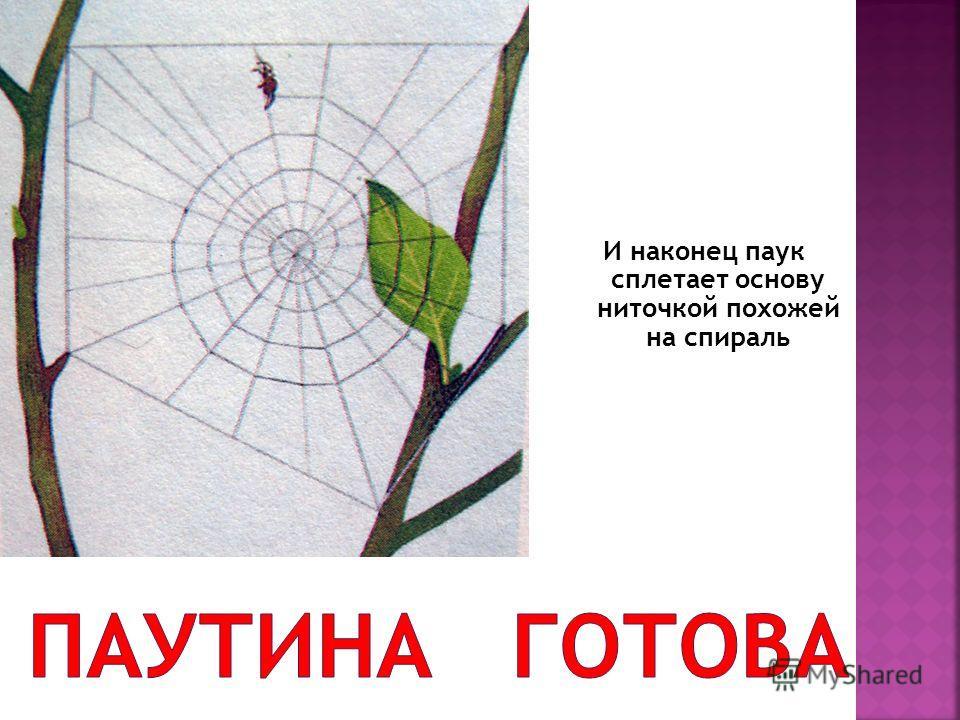 И наконец паук сплетает основу ниточкой похожей на спираль