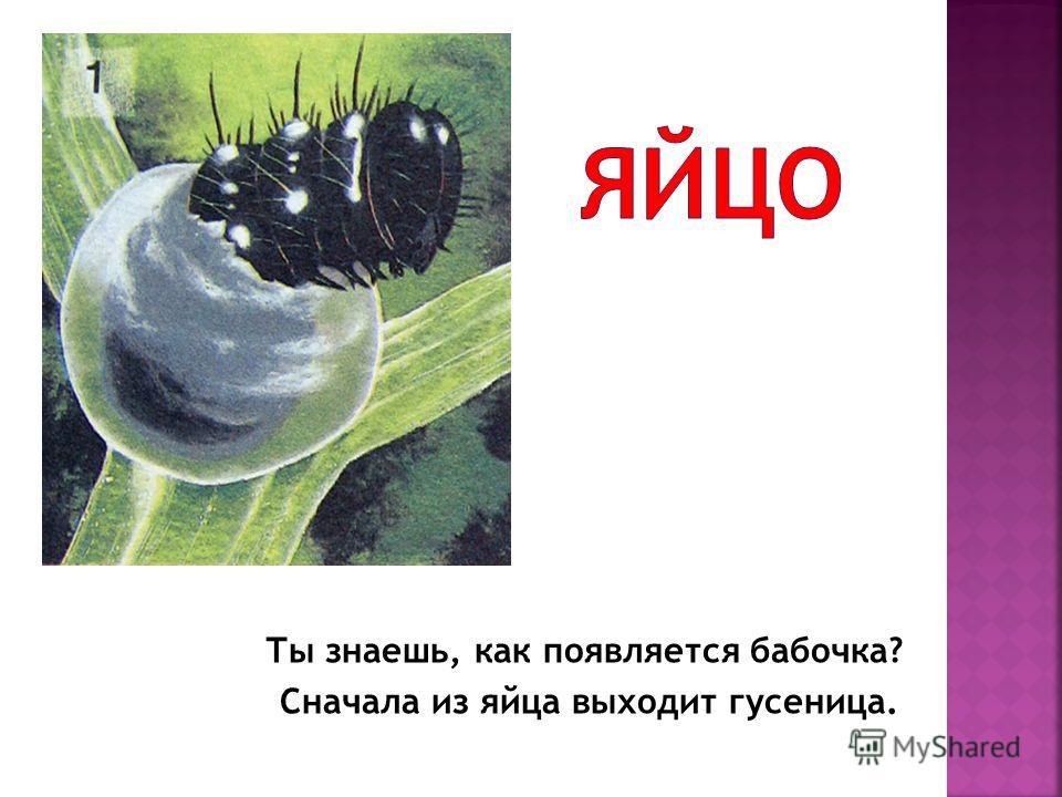 Ты знаешь, как появляется бабочка? Сначала из яйца выходит гусеница.