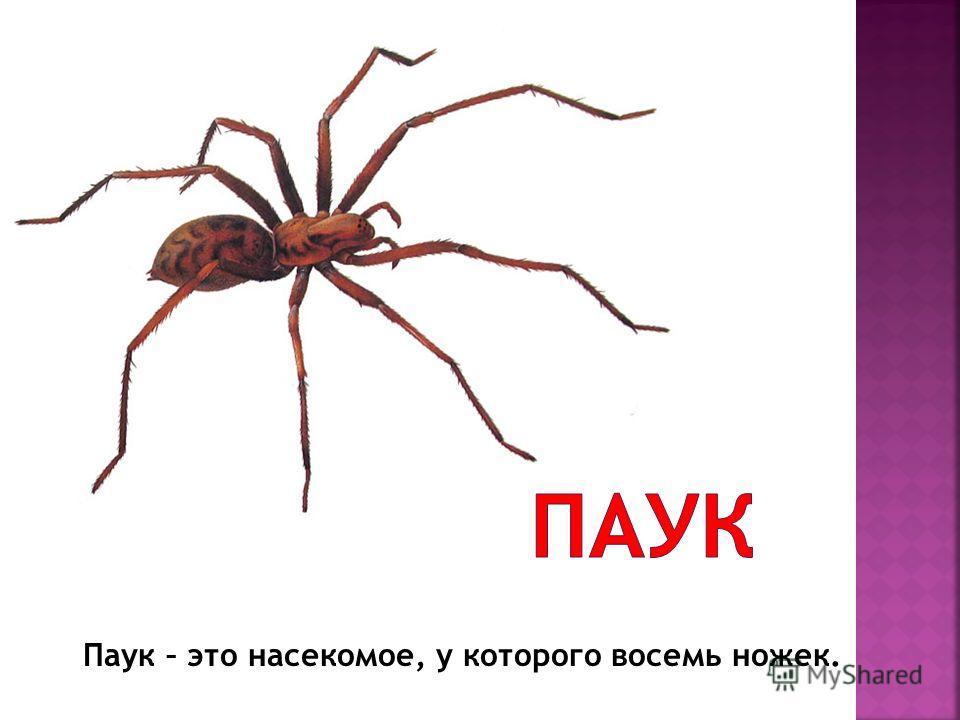 Паук – это насекомое, у которого восемь ножек.
