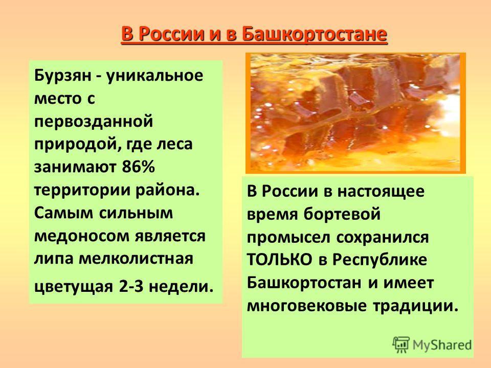 В России и в Башкортостане Бурзян - уникальное место с первозданной природой, где леса занимают 86% территории района. Самым сильным медоносом является липа мелколистная цветущая 2-3 недели. В России в настоящее время бортевой промысел сохранился ТОЛ