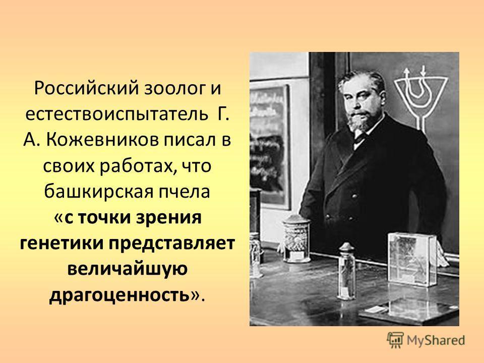 Российский зоолог и естествоиспытатель Г. А. Кожевников писал в своих работах, что башкирская пчела «с точки зрения генетики представляет величайшую драгоценность».