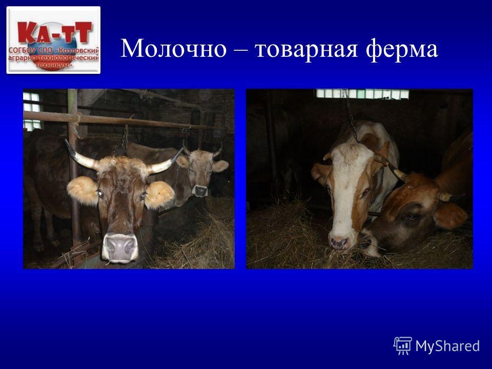 Молочно – товарная ферма