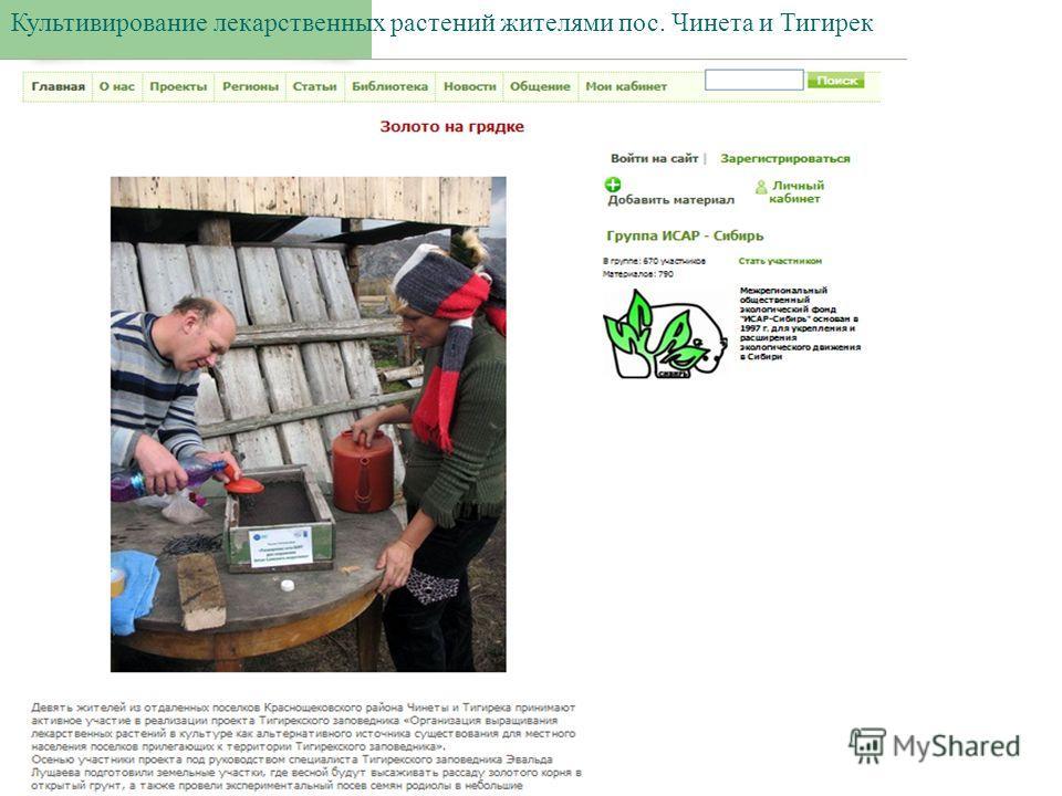 Культивирование лекарственных растений жителями пос. Чинета и Тигирек
