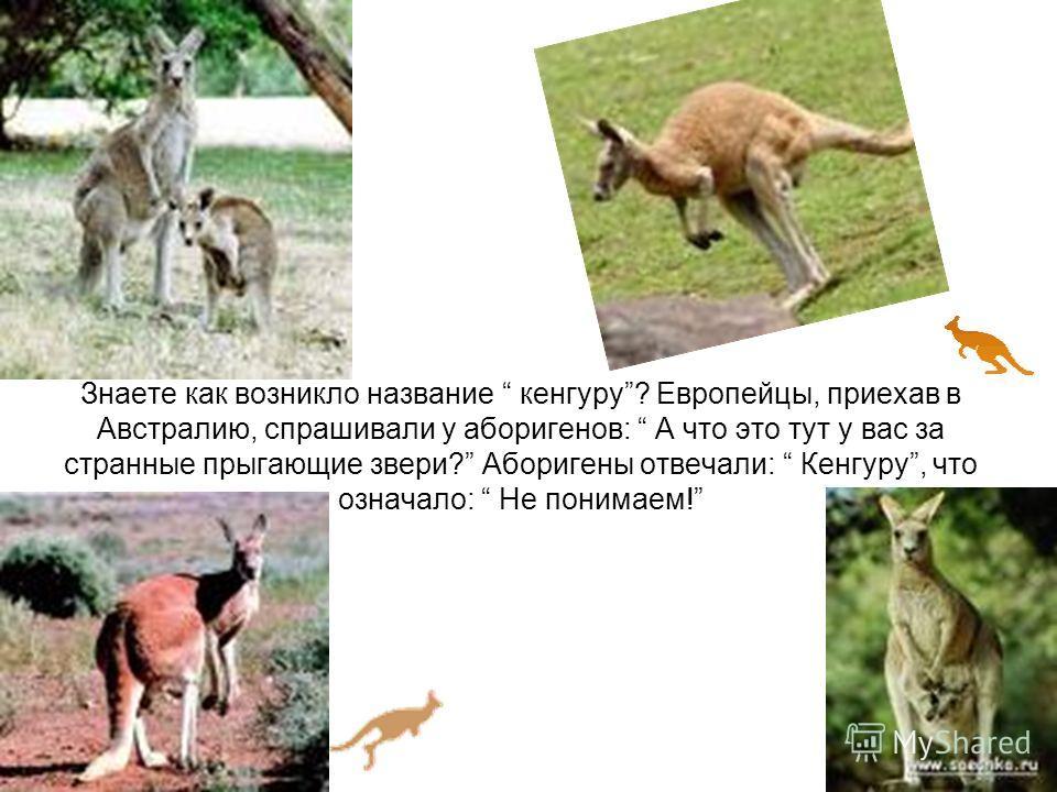 Знаете как возникло название кенгуру? Европейцы, приехав в Австралию, спрашивали у аборигенов: А что это тут у вас за странные прыгающие звери? Аборигены отвечали: Кенгуру, что означало: Не понимаем!