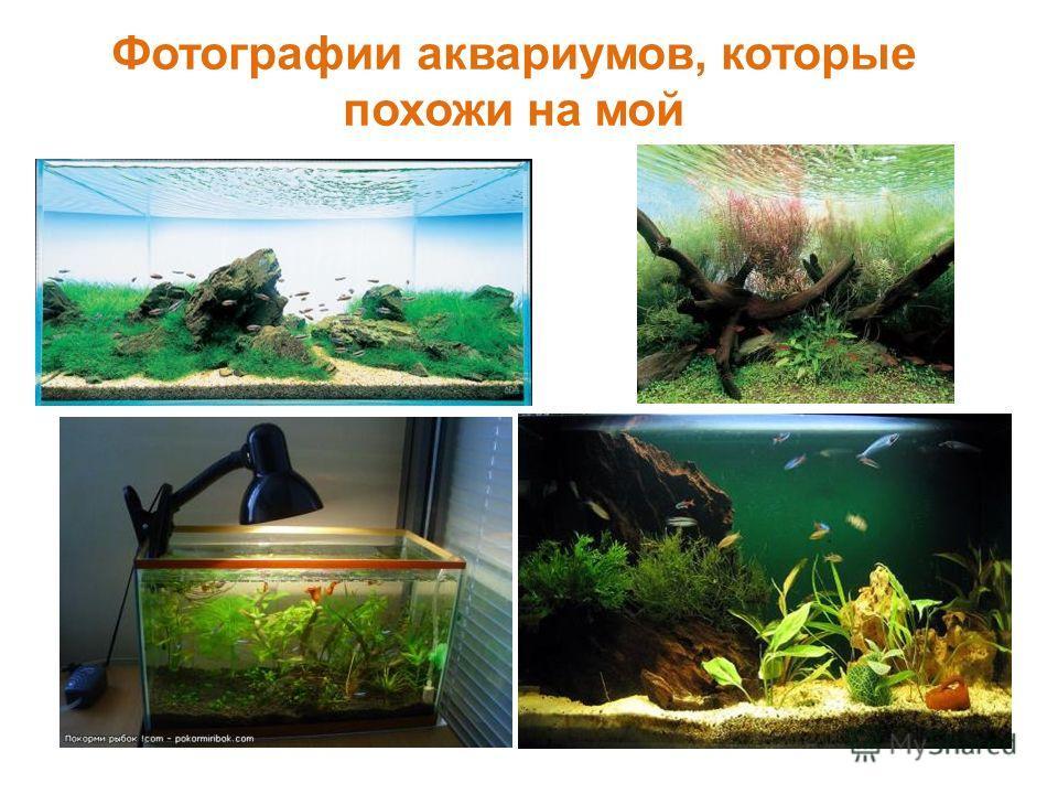Фотографии аквариумов, которые похожи на мой