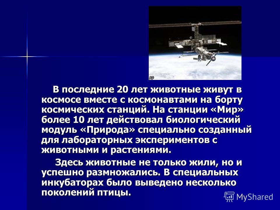 В последние 20 лет животные живут в космосе вместе с космонавтами на борту космических станций. На станции «Мир» более 10 лет действовал биологический модуль «Природа» специально созданный для лабораторных экспериментов с животными и растениями. В по