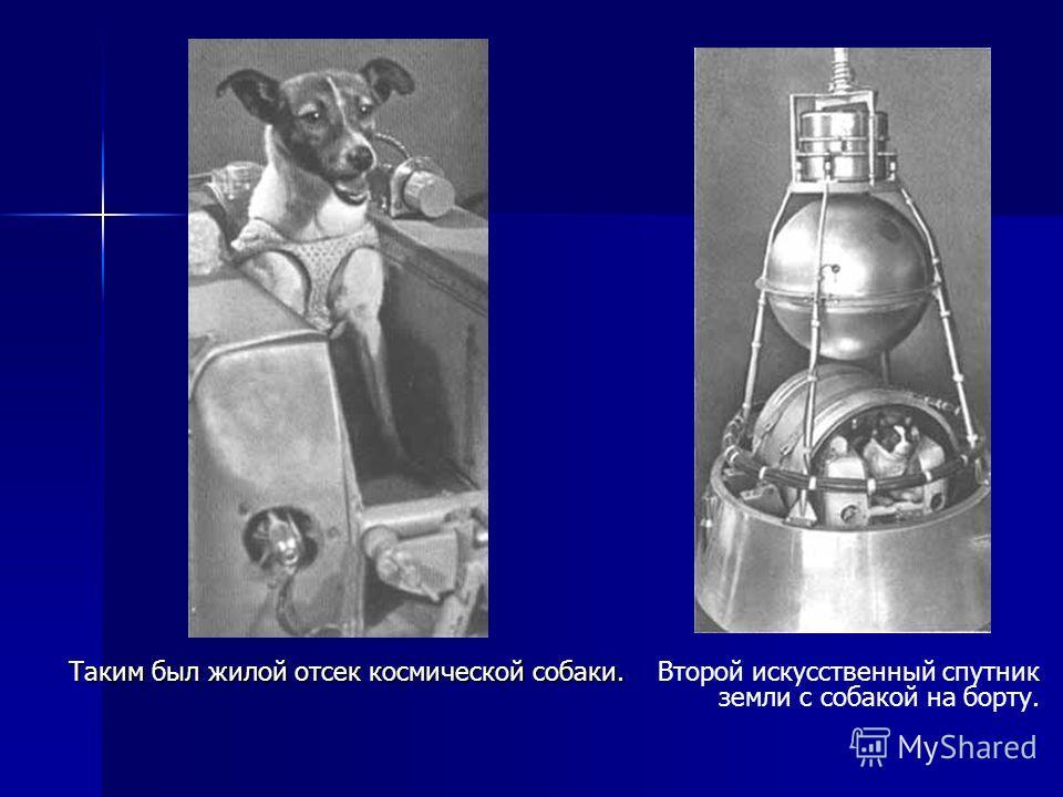 Таким был жилой отсек космической собаки. Второй искусственный спутник земли с собакой на борту.