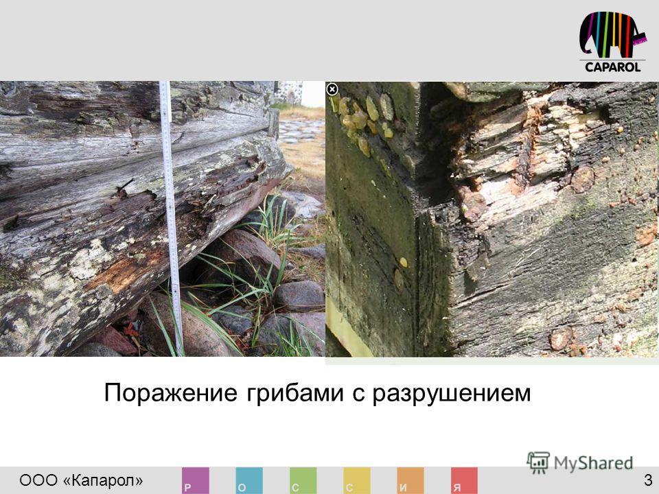 ООО «Капарол» 3 Поражение грибами с разрушением