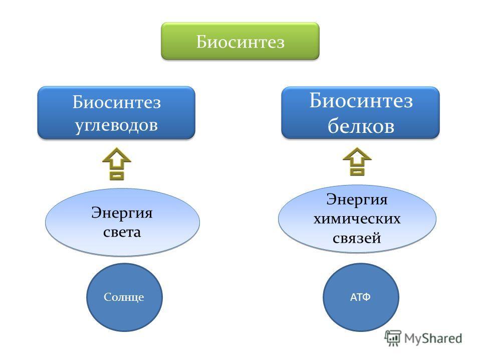 Биосинтез Биосинтез углеводов Биосинтез белков Энергия света Энергия света Энергия химических связей Энергия химических связей СолнцеАТФ