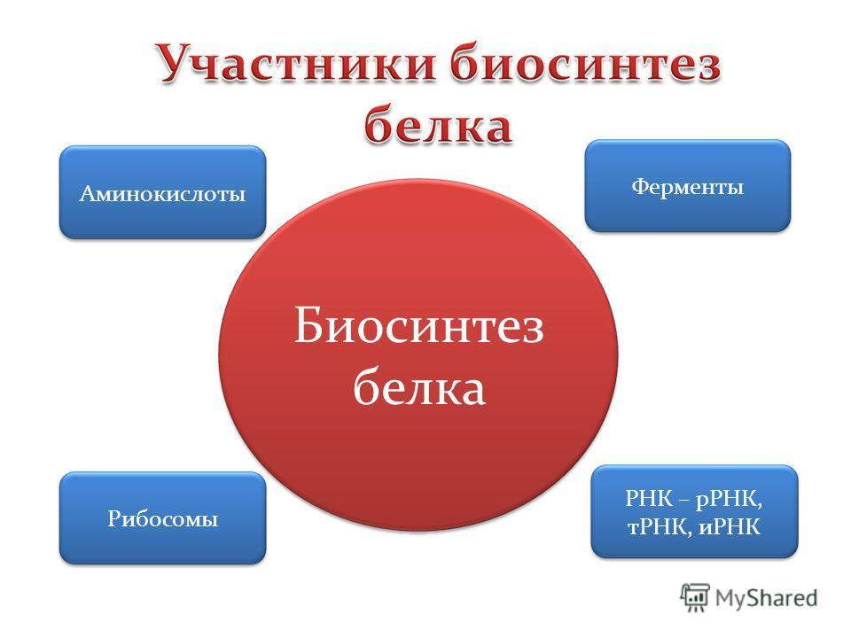 Аминокислоты ФерментыРибосомы РНК – рРНК, тРНК, иРНК Биосинтез белка