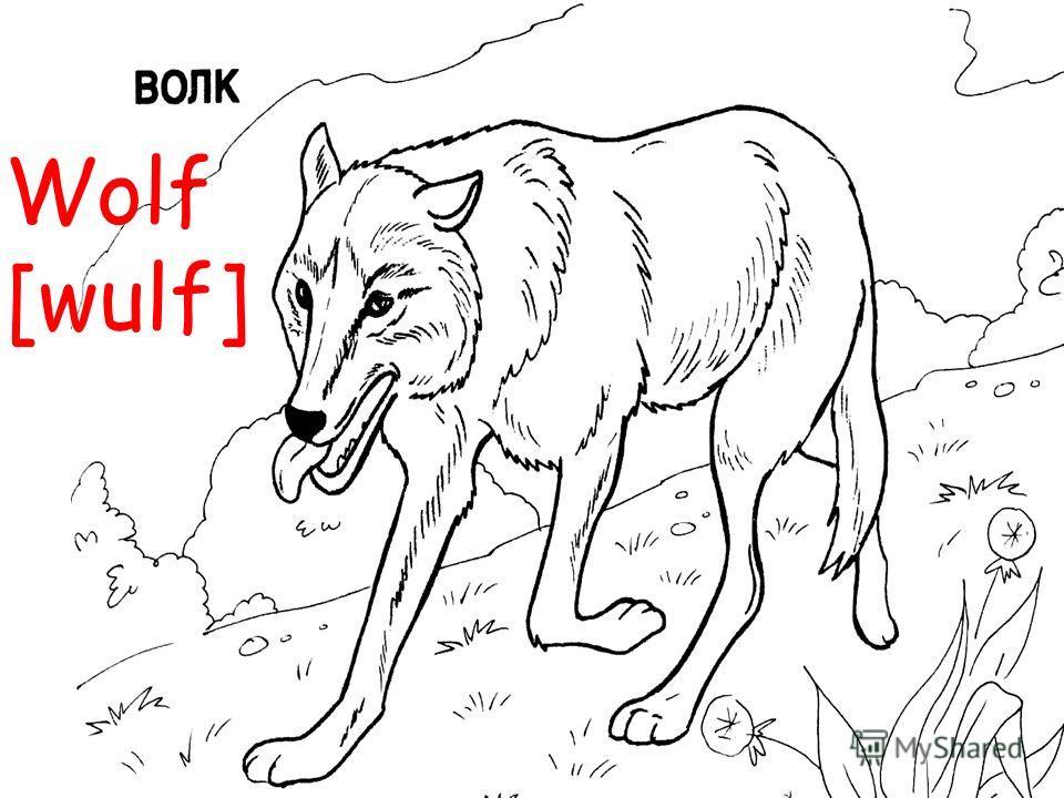 Wolf [wulf]
