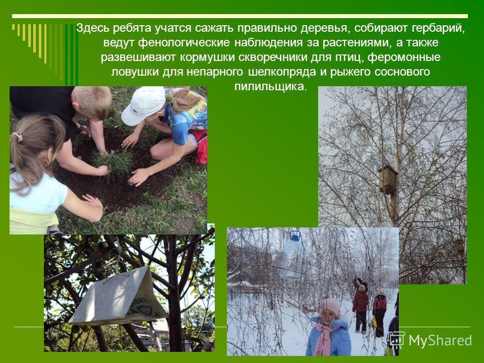 Здесь ребята учатся сажать правильно деревья, собирают гербарий, ведут фенологические наблюдения за растениями, а также развешивают кормушки скворечники для птиц, феромонные ловушки для непарного шелкопряда и рыжего соснового пилильщика.