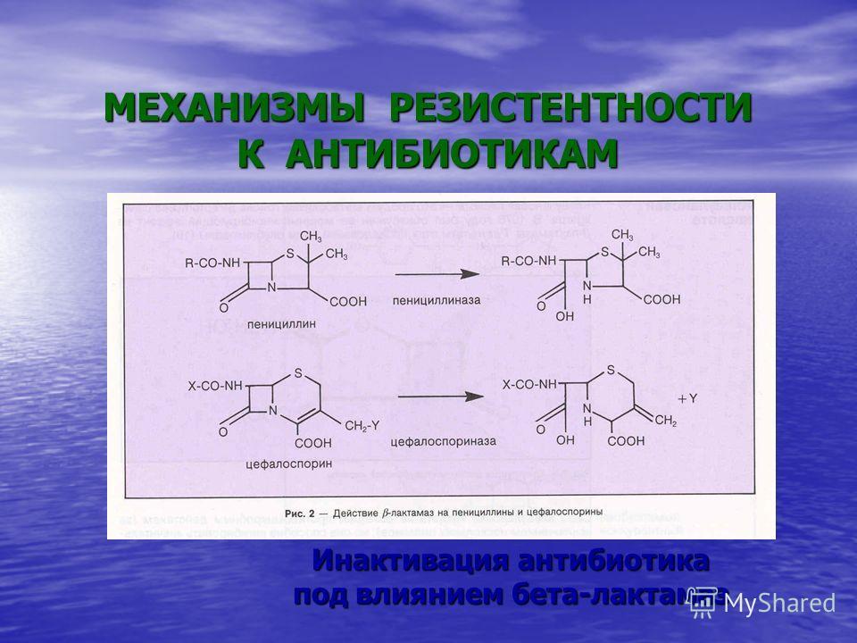 Инактивация антибиотика под влиянием бета-лактамаз МЕХАНИЗМЫ РЕЗИСТЕНТНОСТИ К АНТИБИОТИКАМ