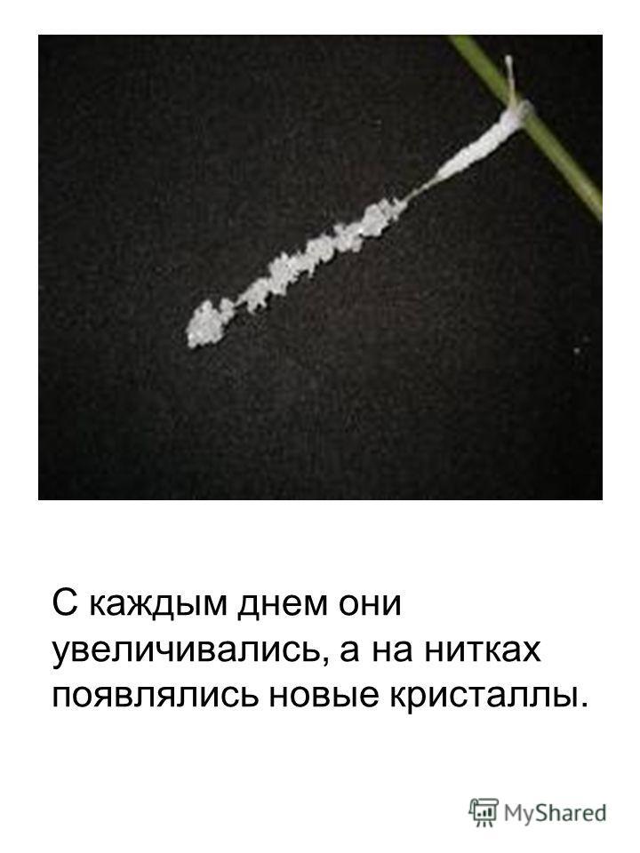 С каждым днем они увеличивались, а на нитках появлялись новые кристаллы.