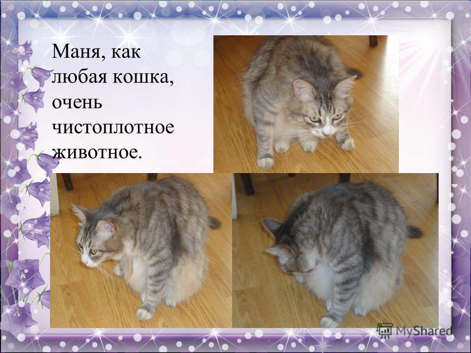 Маня, как любая кошка, очень чистоплотное животное.