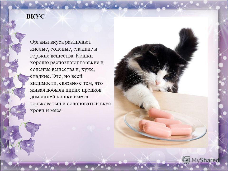 ВКУС Органы вкуса различают кислые, соленые, сладкие и горькие вещества. Кошки хорошо распознают горькие и соленые вещества и, хуже, сладкие. Это, но всей видимости, связано с тем, что живая добыча диких предков домашней кошки имела горьковатый и сол