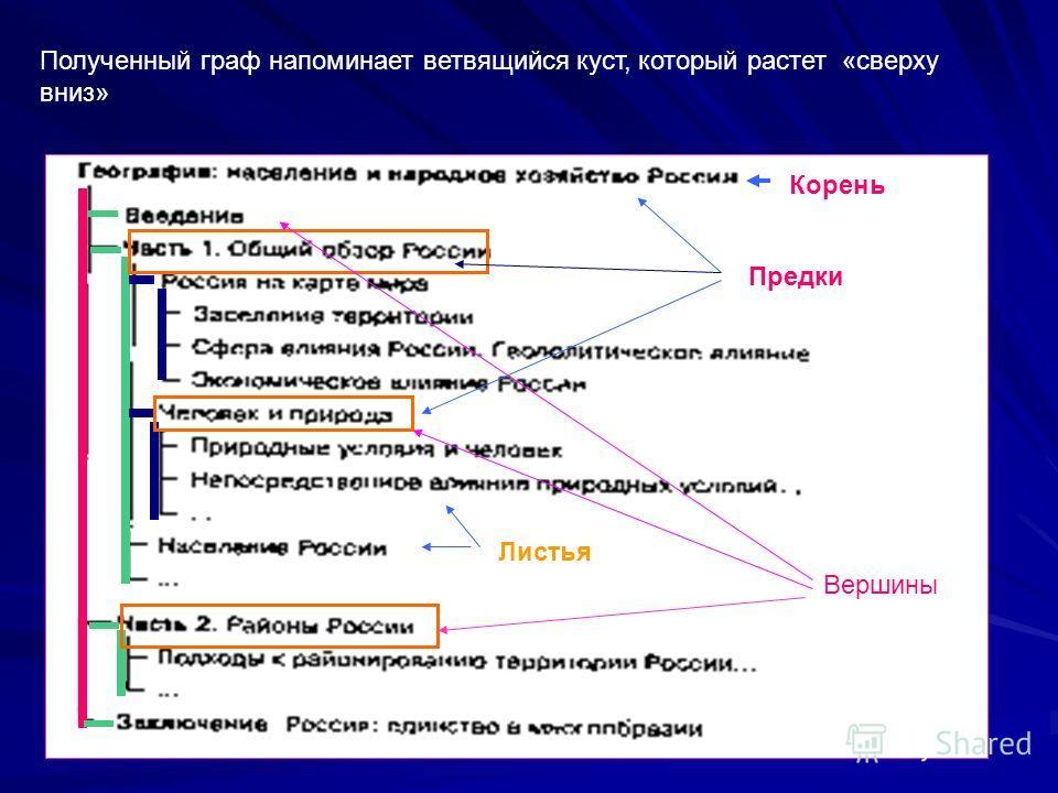 Полученный граф напоминает ветвящийся куст, который растет «сверху вниз» Предки Вершины Корень Листья